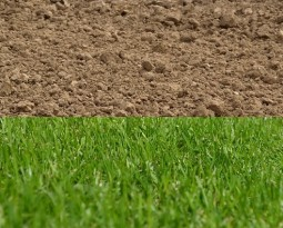Replacing Your Soil To Start A Lawn: What Should You Expect?