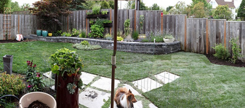 Using Strategic Landscaping To Create Privacy In Your Backyard