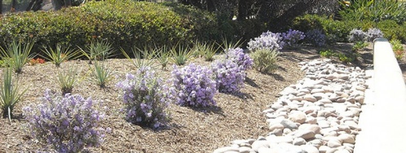 How To Use Drought Resistant Gardening Effectively