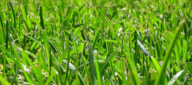 6 Tips For Choosing The Best Grass For Your Lawn